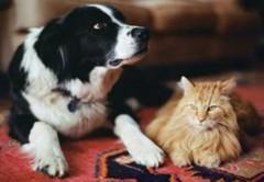 cane-e-gatto-morte-per-botti1.jpg