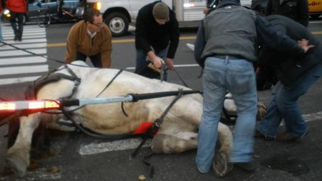 Cavallo Con Carrozza Cade A Central Park Partono Le