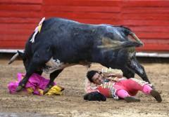 20120312_19884_il_toro_silencioso_centra_il_torero_albe.jpg