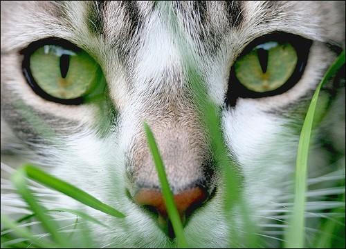 Conegliano chiude il gatto in casa e va in vacanza news - Gatto solo in casa per 15 giorni ...