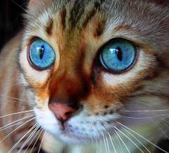 animali,gatto ucciso olbia,6 mesi di galera per uccisione animali,maltrattamento animali,news animaslite,notizie animaliste,news animali,sensenze animali
