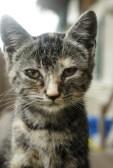 4130851-povero-gatto-randagio-grigio-a-righe.jpg