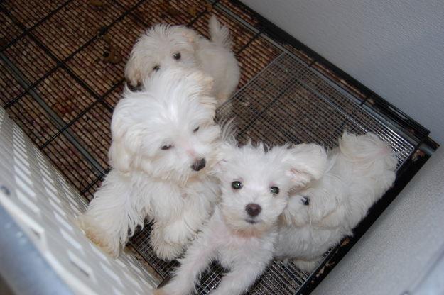 Cani Sequestrati Udine News Animaliste