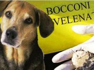 bocconi_avvelenati111111